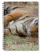 Tiger Resting Spiral Notebook