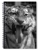 Tiger Say Aw Spiral Notebook