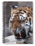 Tiger Smile Spiral Notebook