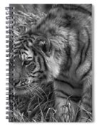 Tiger Stalking In Black And White Spiral Notebook