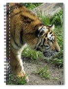 Tiger Stalking Spiral Notebook