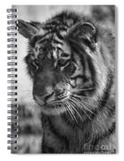 Tiger Stare In Black And White Spiral Notebook