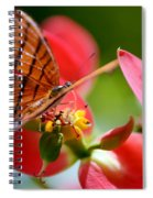 Tiger Stripped Butterfly Spiral Notebook