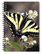Tiger Swallowtail Butterfly 2a Spiral Notebook