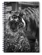 Tiger With A Cold Stare Spiral Notebook