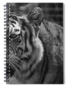 Tiger With A Hard Stare Spiral Notebook