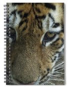 Tiger You Looking At Me Spiral Notebook