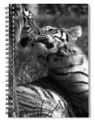 Tigers Kissing Spiral Notebook