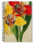 Tigridia Pavonia And Conchiflora Spiral Notebook