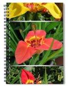 Tigridia Pavonia Spiral Notebook