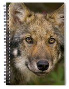 Timber Wolf In Denali Spiral Notebook