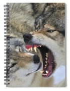 Timber Wolves Play Spiral Notebook