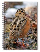 Timberdoodle The American Woodcock Spiral Notebook