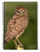 Tiny Burrowing Owl Spiral Notebook