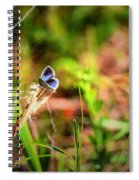 Tiny Butterfly Spiral Notebook