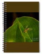 Tiny Fly Spiral Notebook