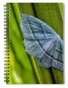 Tiny Moth On A Blade Of Grass Spiral Notebook