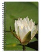 Tiny White Spiral Notebook