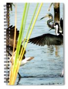 Tiptoe Like This Spiral Notebook