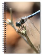 Tired Dragonfly Square Spiral Notebook
