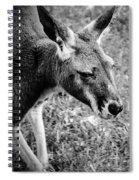 Tired Old Kangaroo Spiral Notebook