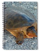 Tired Turtle Spiral Notebook