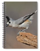 Titmouse Preparing For Takeoff Spiral Notebook