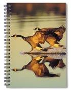 Tk0157, Thomas Kitchin Canada Geese Spiral Notebook