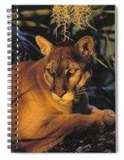 Tk0397, Thomas Kitchin Florida Panther Spiral Notebook