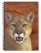 Tk0460, Thomas Kitchin Cougarmountain Spiral Notebook