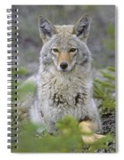 Tk0607, Thomas Kitchin Coyote In Spring Spiral Notebook