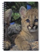 Tk0615, Thomas Kitchin Cougarmountain Spiral Notebook