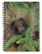 T.kitchin 14107c, Porcupine In Spruce Spiral Notebook