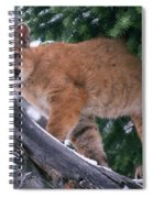 T.kitchin 15274d, Cougar Kitten Spiral Notebook