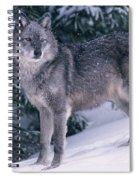 T.kitchin, 19821c Gray Wolf, Winter Spiral Notebook