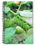 Tobacco Hornworm - Manduca Sexta - Six Spotted Hawkmoth Spiral Notebook
