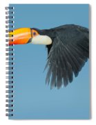 Toco Toucan In Flight Spiral Notebook