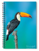 Toco Toucan Perched Spiral Notebook