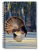 Tom Turkey Fan Spiral Notebook