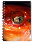 Tomato Frog Spiral Notebook