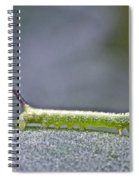 Tomato Hornworm - Manduca Quinquemaculata - Five Spotted Hawkmoth Spiral Notebook