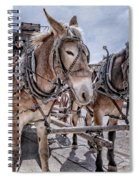 Tombstone Mules Spiral Notebook