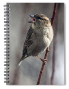Tongue Of The Sparrow Spiral Notebook