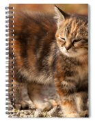 Too Bright Spiral Notebook