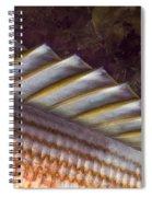 Top Fin Design Spiral Notebook