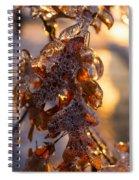 Toronto Ice Storm 2013 - Oak Leaves Jewelry Spiral Notebook