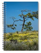 Torrey Pine On The Cliffs At Torrey Pines State Natural Reserve Spiral Notebook