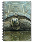 Tortoise Spiral Notebook