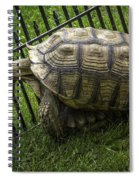Tortoise Turtle Time Spiral Notebook