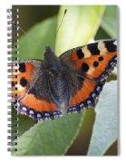 Tortoiseshell 2 Spiral Notebook